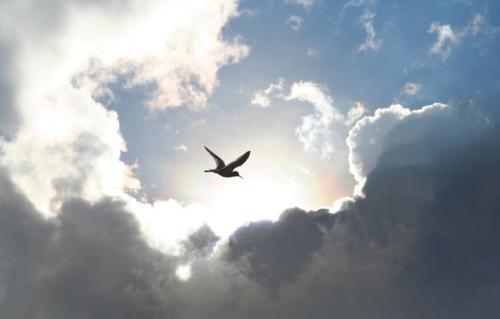 lintu-pilvissa