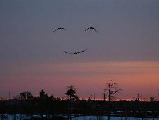 smile birds