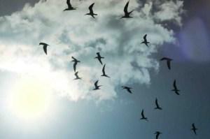 free_birds_linnut_P
